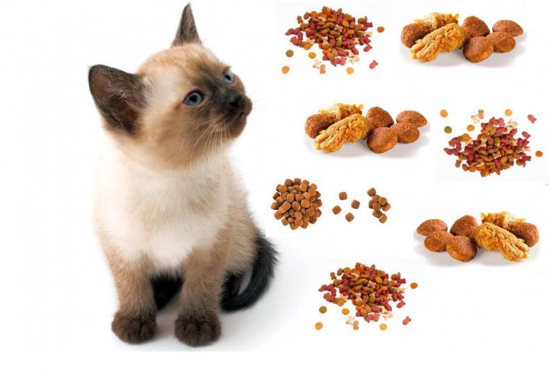 Рейтинг кормов для кошек 2021 (по качеству) - петобзор