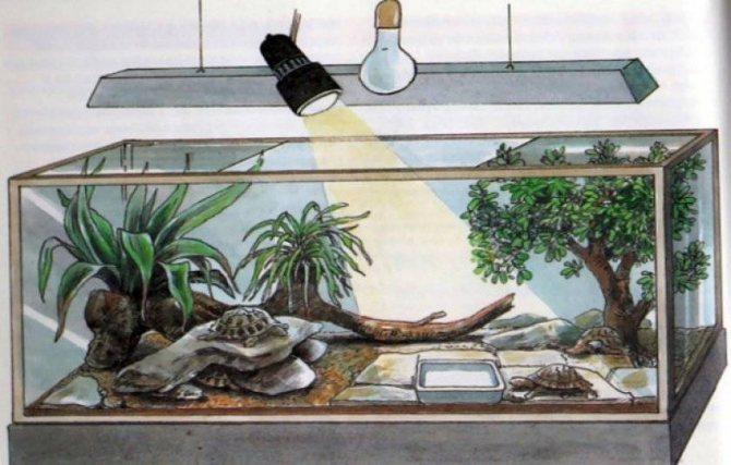 Домашние рептилии — виды и условия содержания - жизнь в москве - молнет.ru