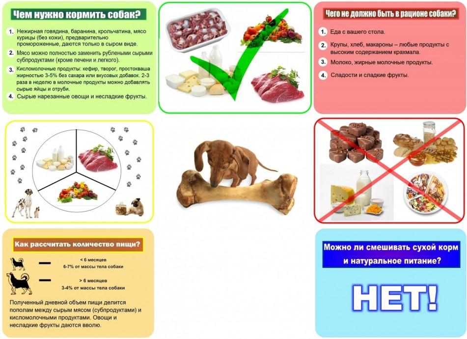 Чем кормить собаку (натуральное питание) | ветеринария и зоотехния