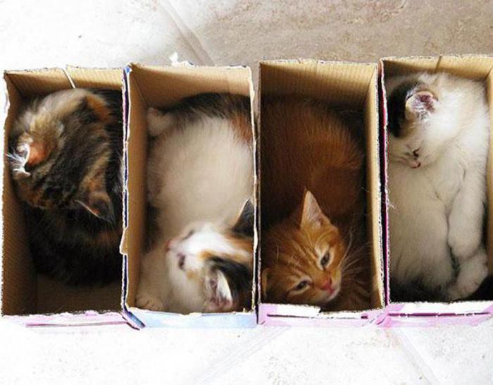 Почему кошки любят залезать и сидеть в коробках?