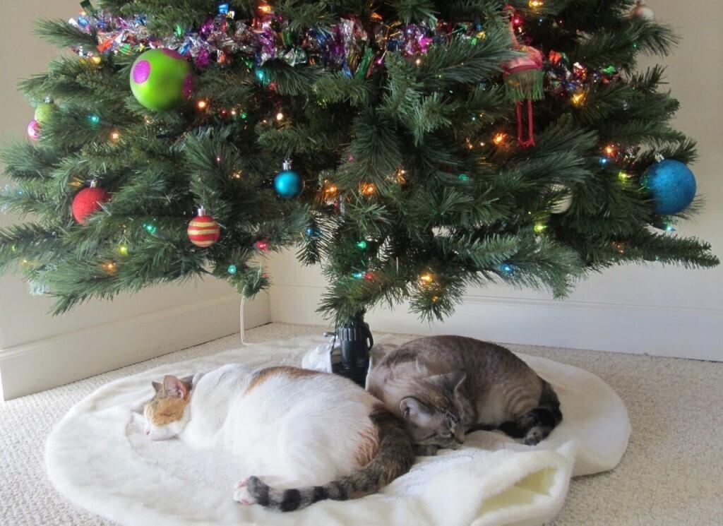 10 способов помочь кошке освоиться в новом доме