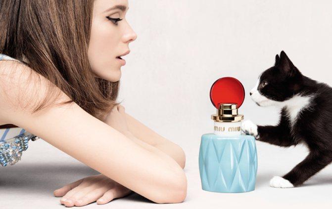 "Какие запахи не любят кошки? | блог ветклиники ""беланта"""