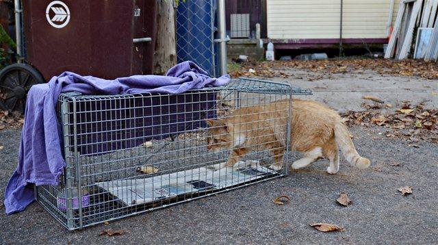 Как выманить кошку из укрытия – как достать кота?
