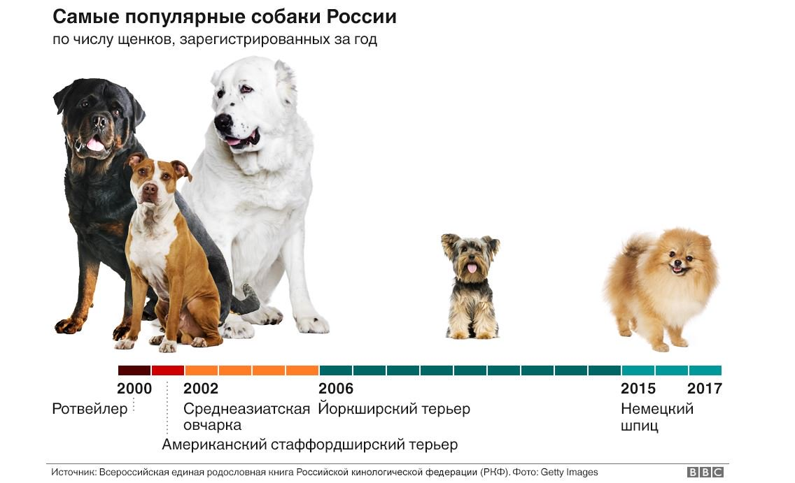 Самые преданные породы собак – список, названия, описание, фото и видео