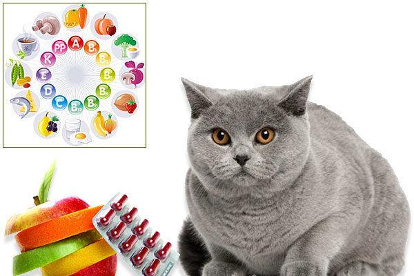 Лучшие витамины для кошек