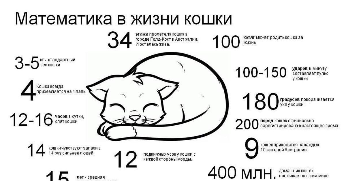 Откуда взялось поверье о том, что у кошек девять жизней: 5 невероятных теорий