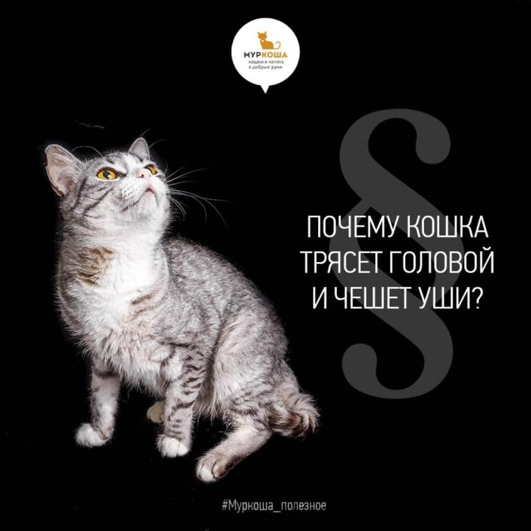 Почему кошка трясут хвостом как будто метит