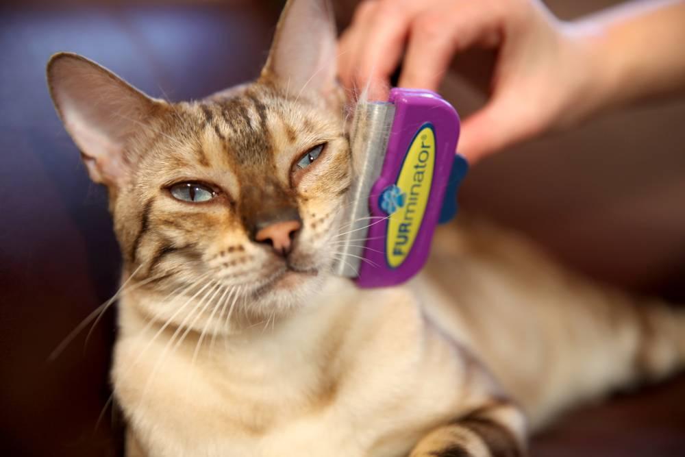 Фурминатор для собак: что это такое, как часто и когда использовать