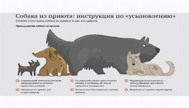 Как вести себя с животными из приюта: пять основных правил - gafki.ru