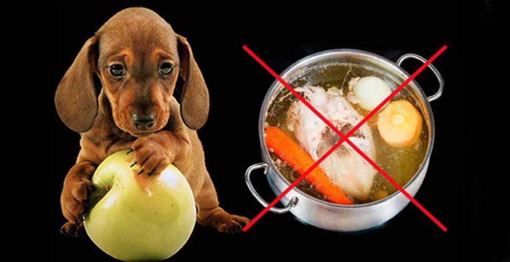 Можно ли собакам виноград, стоит ли давать его щенку
