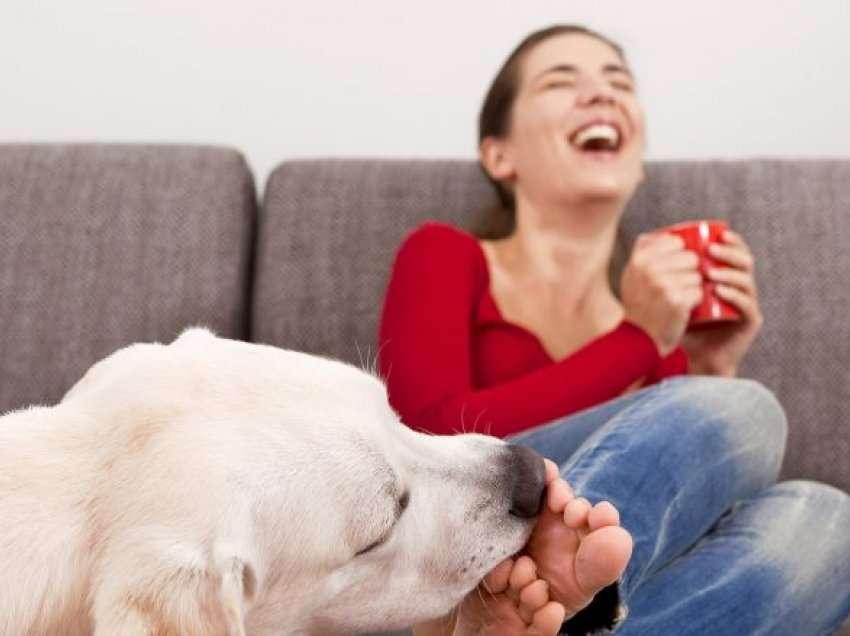Почему собака облизывает хозяина и можно ли целоваться с собакой | hill's pet