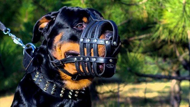 Намордник для собаки, как выбрать?