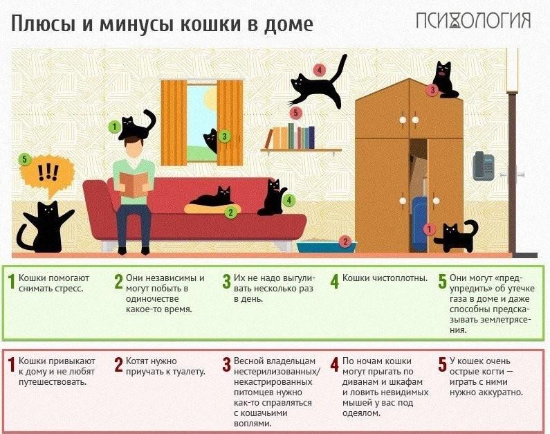 Котёнок в доме. первые дни котёнка в новом доме