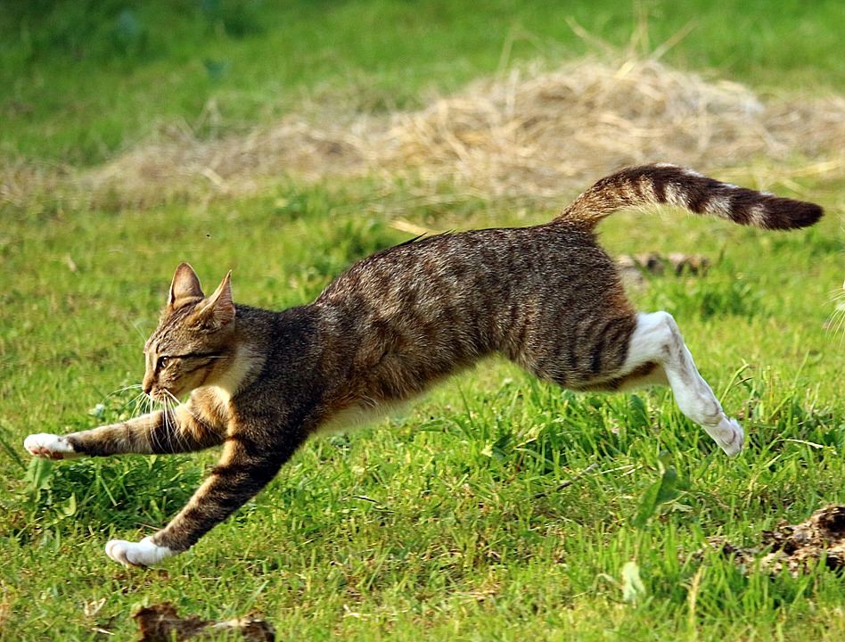 Это интересно: кошачий хвост
