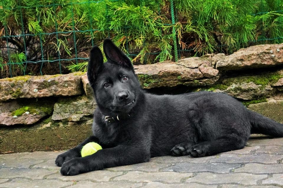 Собака для ленивых хозяев: самые неприхотливые породы