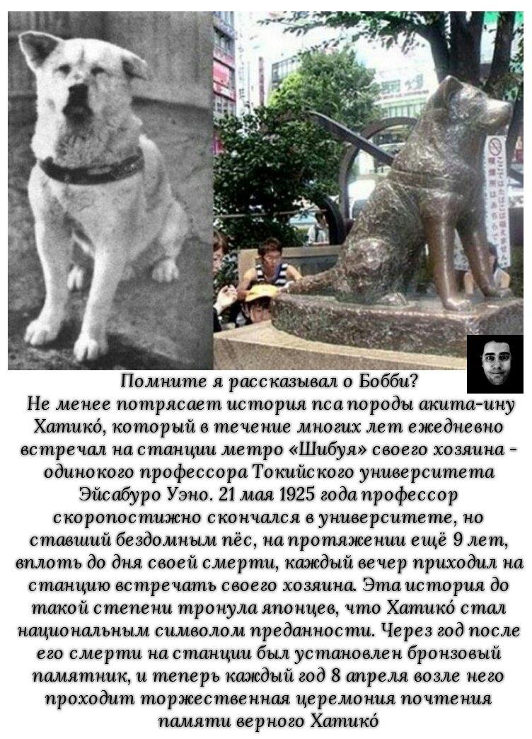 ᐉ какой породы была собака в фильме хатико — на какой цнцахики пес? - zoomanji.ru