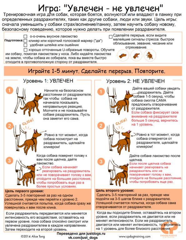 Как научить собаку командам: список команд