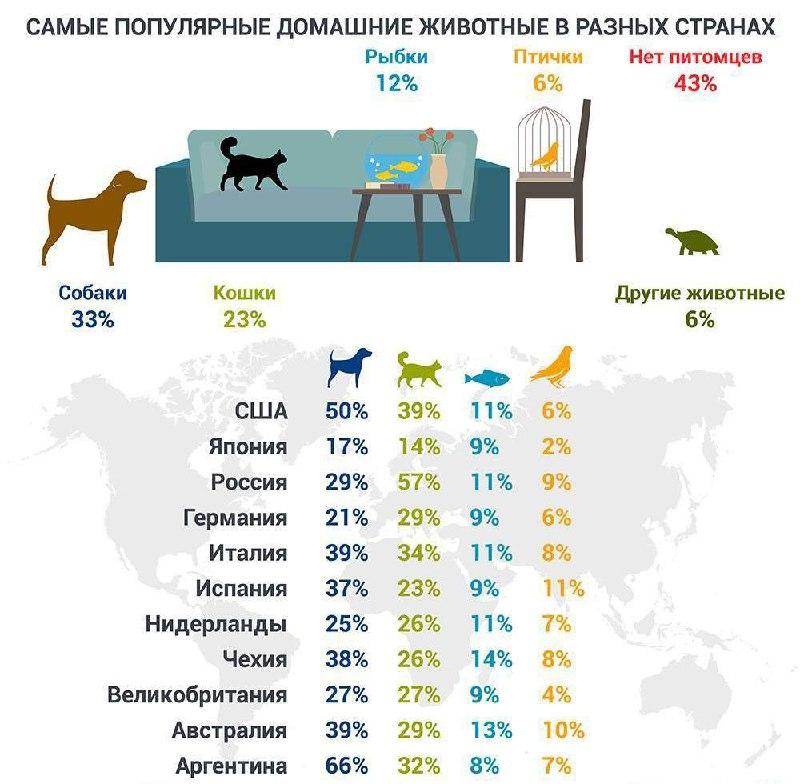 Толстые собаки: самые жирные питомцы в мире