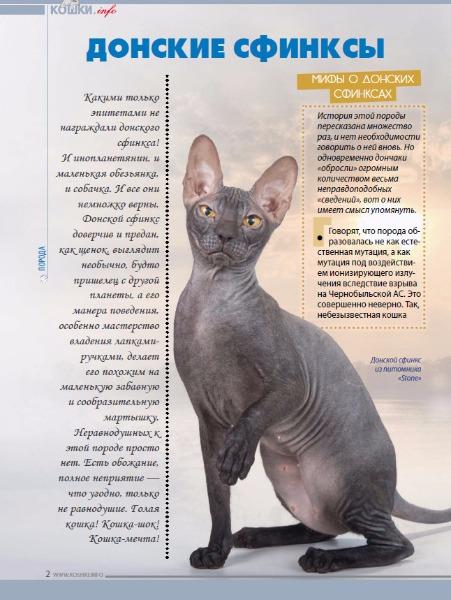 Кошки породы донской сфинкс, особенности характера и разновидности окрасов, фото кошек