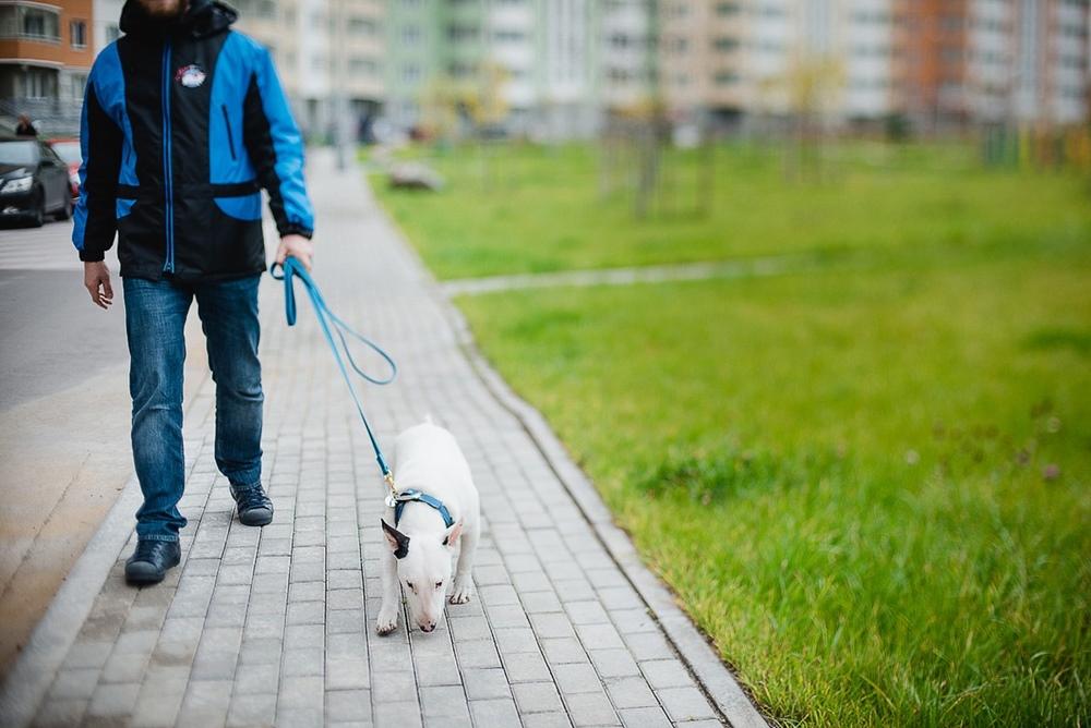 Сколько можно получить, выгуливая чужих собак и как найти тех, кто готов платить от 350 рублей в час