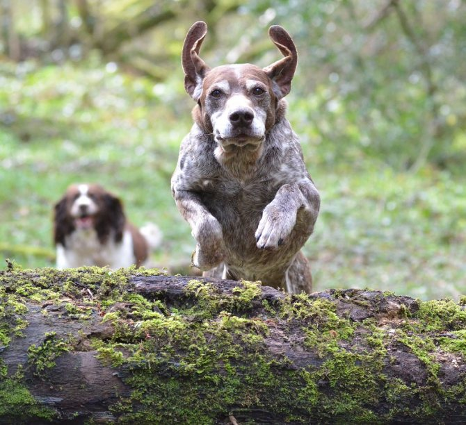 Собаки-долгожители: какие породы живут дольше всех?