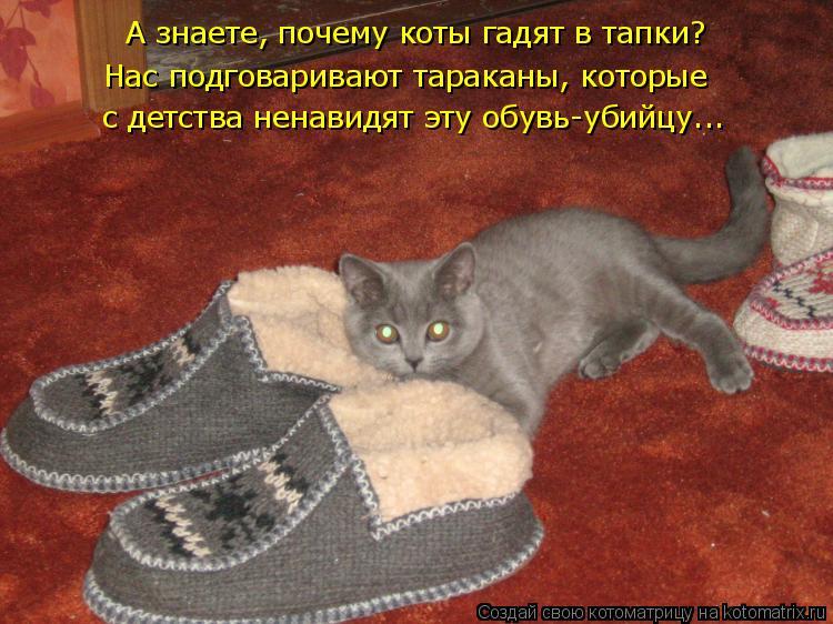 Как научить кота приносить тапочки — это реально!