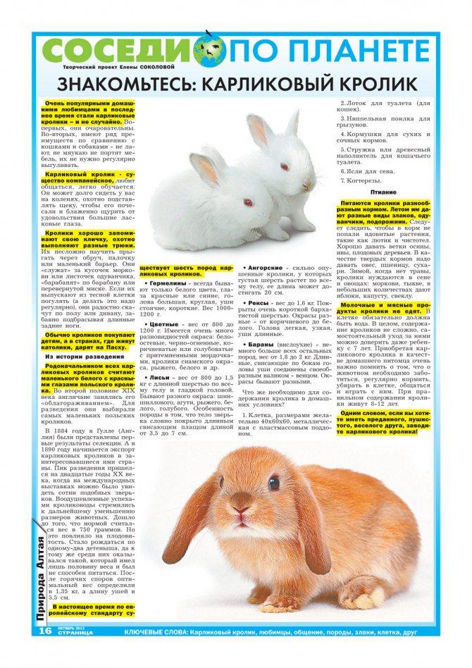 Сколько лет живут кролики в домашних условиях: декоративные, карликовые?