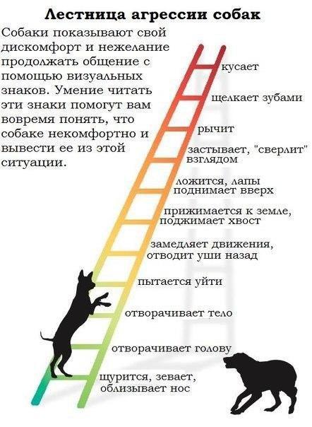 9 причин, почему кошка кидается на хозяев