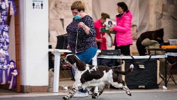 Zooпортал.pro :: international dog show cacib – fci / интернациональная выставка собак cacib – fci «discovery dog show international 2021» . владивосток