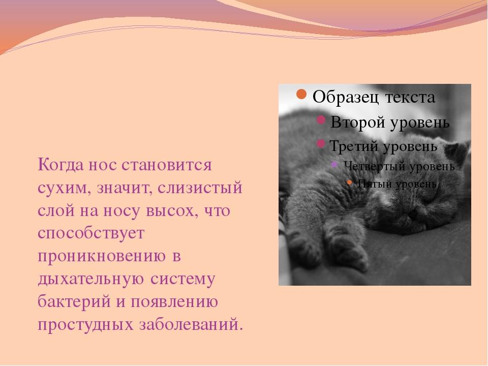 Почему кошка чихает, кашляет и фыркает, что делать и как лечить