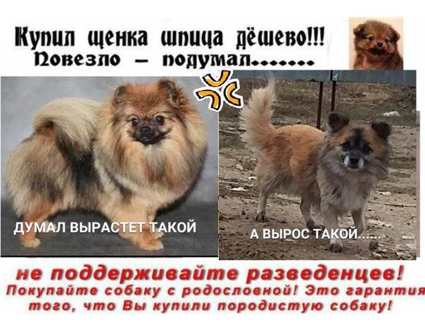 Недорогие породы собак для квартиры, маленькие, средние, большие с ценами и фото | petguru