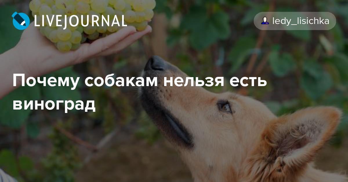 Можно ли собакам виноград: как распознать в продукте опасность