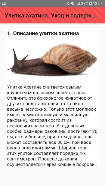 ᐉ что едят сухопутные улитки в домашних условиях? - zoomanji.ru