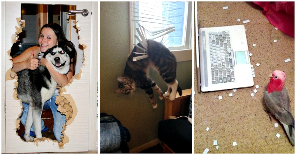 Что делают животные дома в отсутствие хозяина - gafki.ru