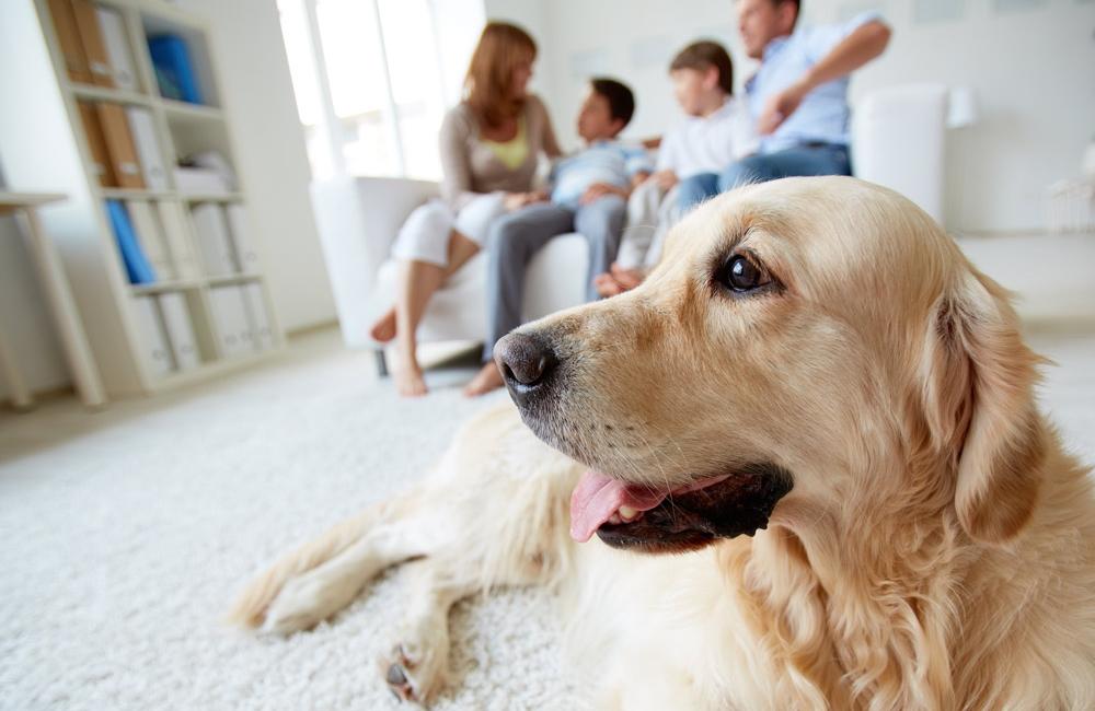 Страхование животных в россии. правила страхования животных сельскохозяйственных и домашних