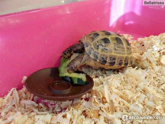 Что ест черепаха в домашних условиях. чем кормить черепаху? - topkin | 2021