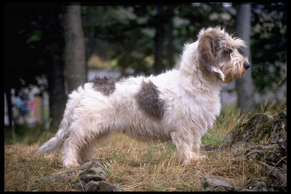 Самые послушные породы собак - названия и фото (каталог)
