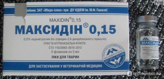 Максидин для кошек - 130 фото действия и применения препарата