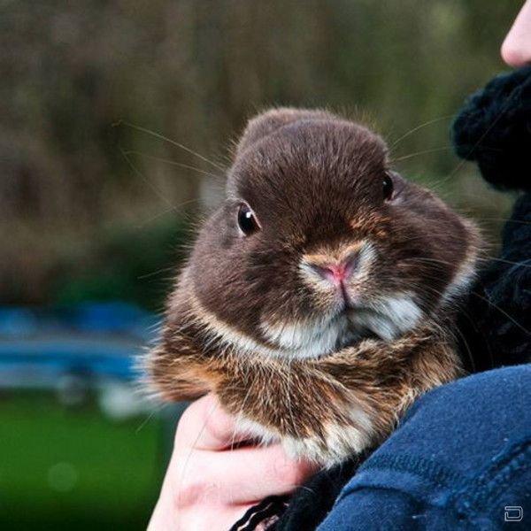Породы кроликов с фото, названием и описанием: домашние, мясные, породистые