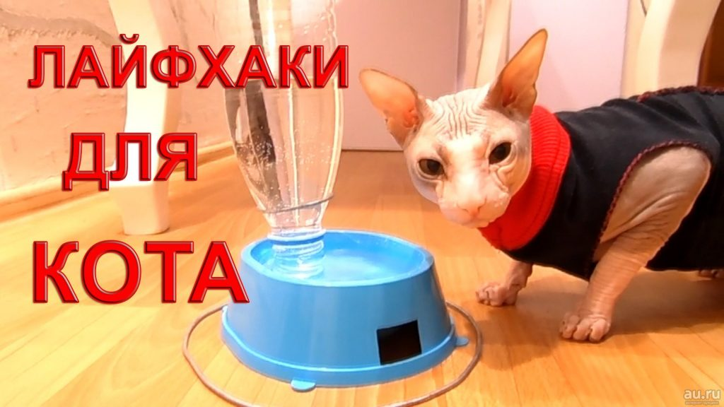 10 лучших лайфхаков для владельцев кошек