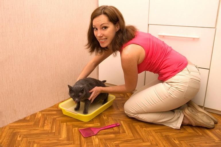 Совет специалиста: как отучить кота гадить в неположенном месте
