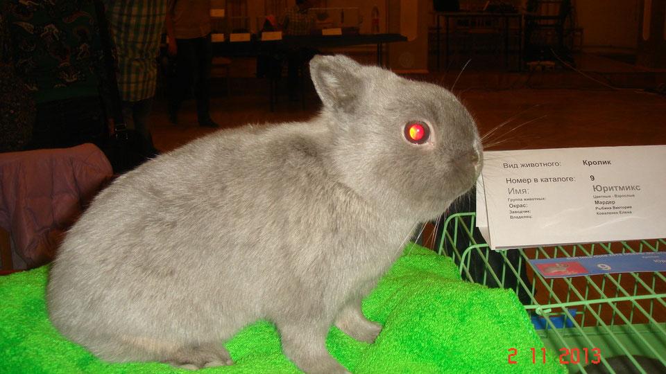 Имена для кроликов: для девочки и мальчика, советы