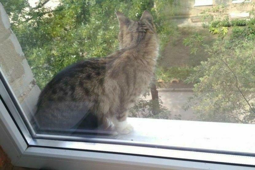 Кошка в доме: трактовка приметы с учетом цвета, поведения и обстоятельств, можно ли держать незамужним