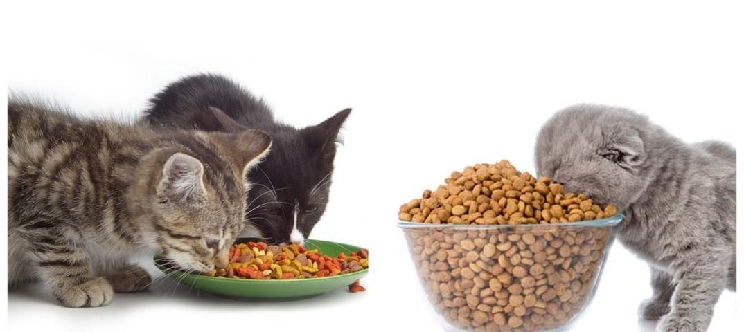 Как заставить кота есть лечебный корм?