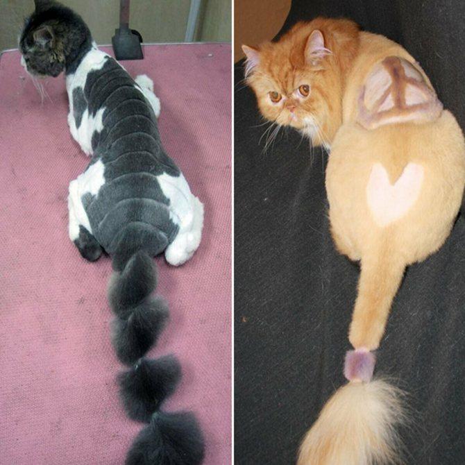 Как обездвижить кошку в домашних условиях?
