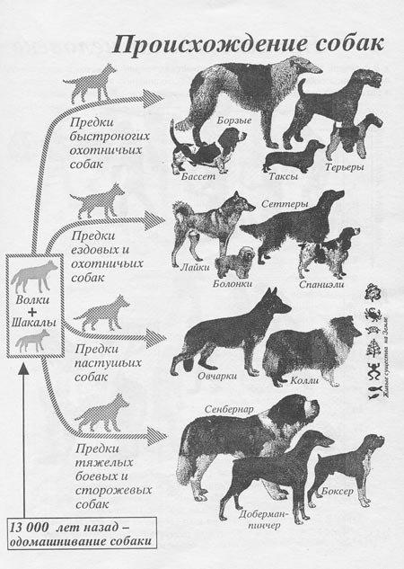 Сколько видов пород собак в мире?