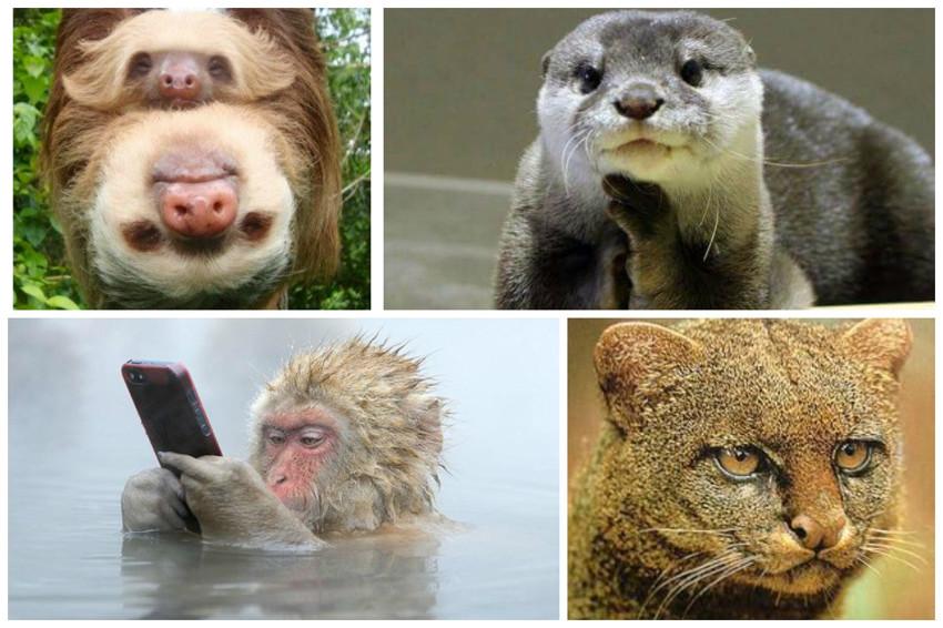 10 самых знаменитых животных в истории