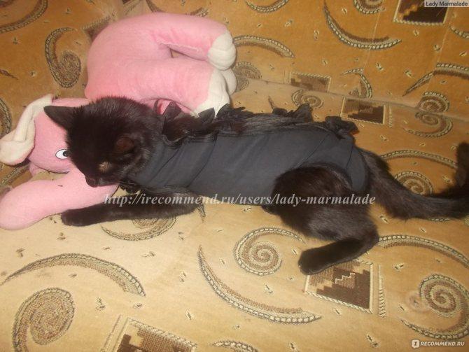Поведение кошки после операции стерилизации