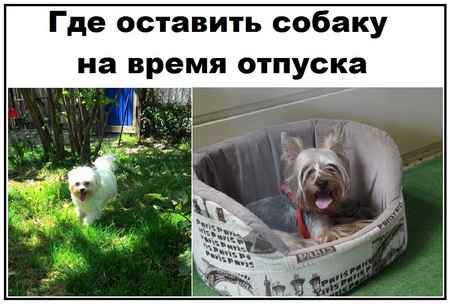 Кому доверить животное на время отпуска?????7 вариантов в москве