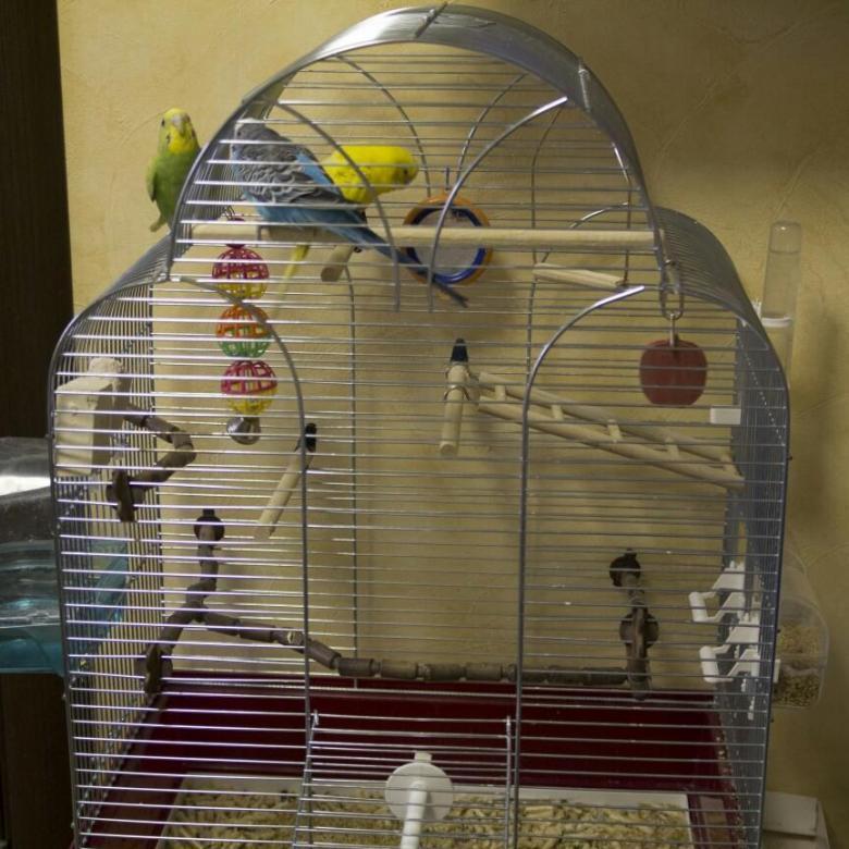 Что нужно в клетке для попугая ???? советы владельцам   pet7
